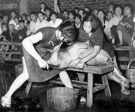美女何以去猪