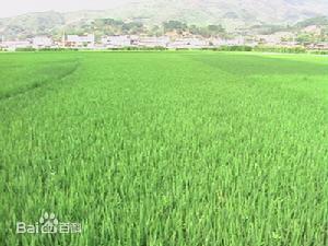 宁洱哈尼族彝族自治县