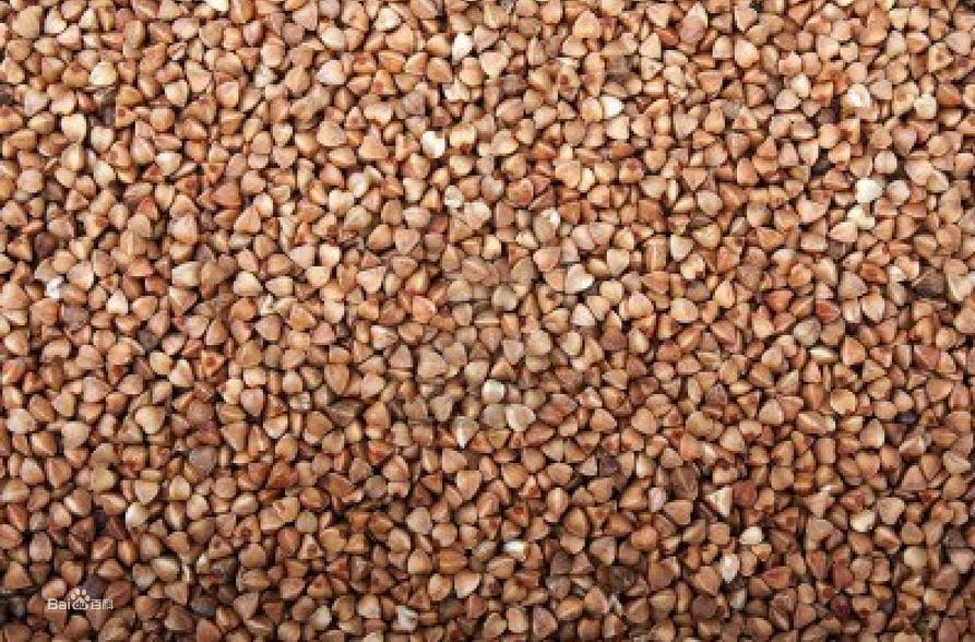 平鲁红山荞麦