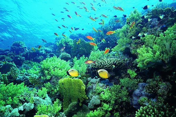指海洋中蕴藏的经济动物和植物的群体数量,是有生命,能自行增殖和不断图片
