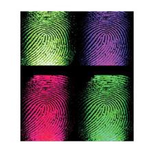 目前最成熟的指纹识别