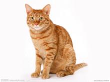 生物分类单位  属   猫