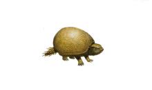 雕齿兽标本