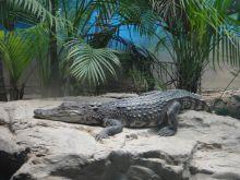 北京动物园两栖爬行动物馆动物