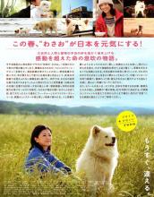 秋田犬蓬夫海报
