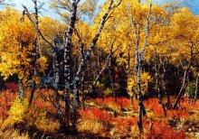 乌拉山国家森林公园