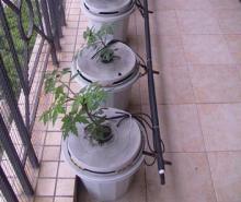家庭种植果菜