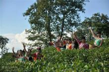 普洱茶博苑