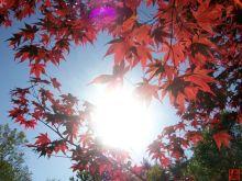 太阳光与生物质