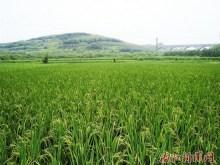 四川之农业篇