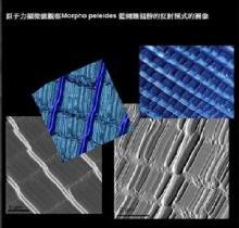 原子力显微镜观察到的图像
