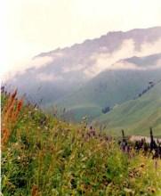 巩乃斯森林公园自然风景图片