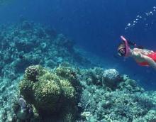 珊瑚礁风光集萃