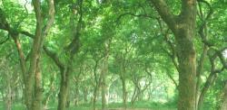 张坝桂圆林