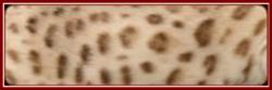 金色系(Brown,属于Tranditional色系)