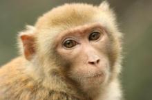 动物世界最小的猴子