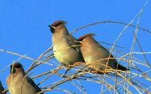 常见的鸟图片
