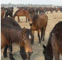 """是位蒙古国骑手""""满都拉""""乘骑的图片"""
