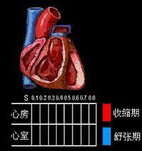 心动周期图片