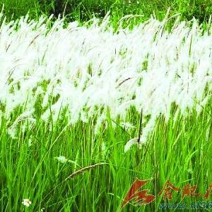壁纸 草 绿色 植物 桌面 300_300图片