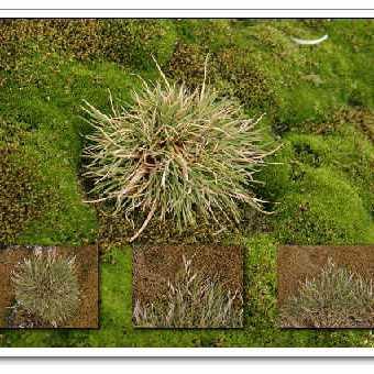 地衣植物图片