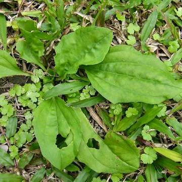 背景 壁纸 绿色 绿叶 树叶 植物 桌面 360_360图片