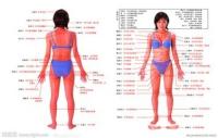 人体经络分布图