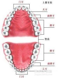 新生儿嘴里上颚有白点