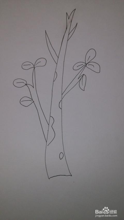 种子发芽简笔画
