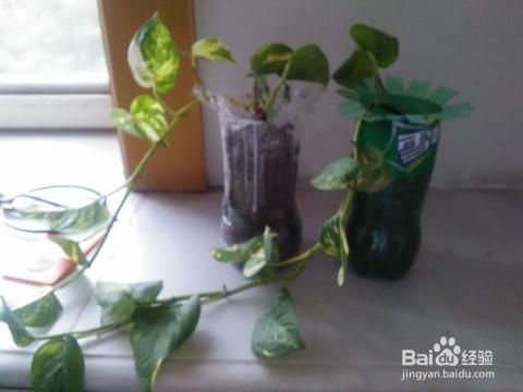 矿泉水瓶变花盆图片