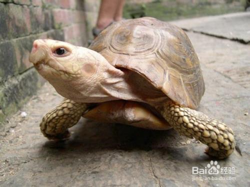 乌龟冬眠要放水吗 乌龟冬眠后不吃东西怎么办
