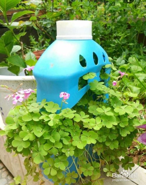 洗衣液瓶子改造花盆图片