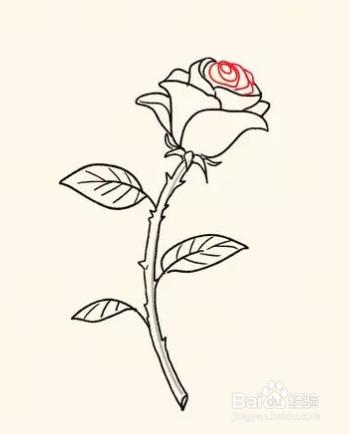 画玫瑰花的简笔画图片