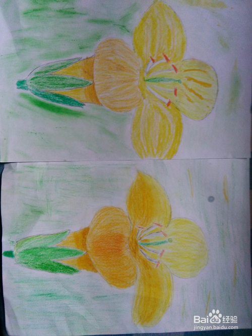 如何用蜡笔画一朵油菜花