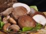 战旗牛小蘑菇福利视频