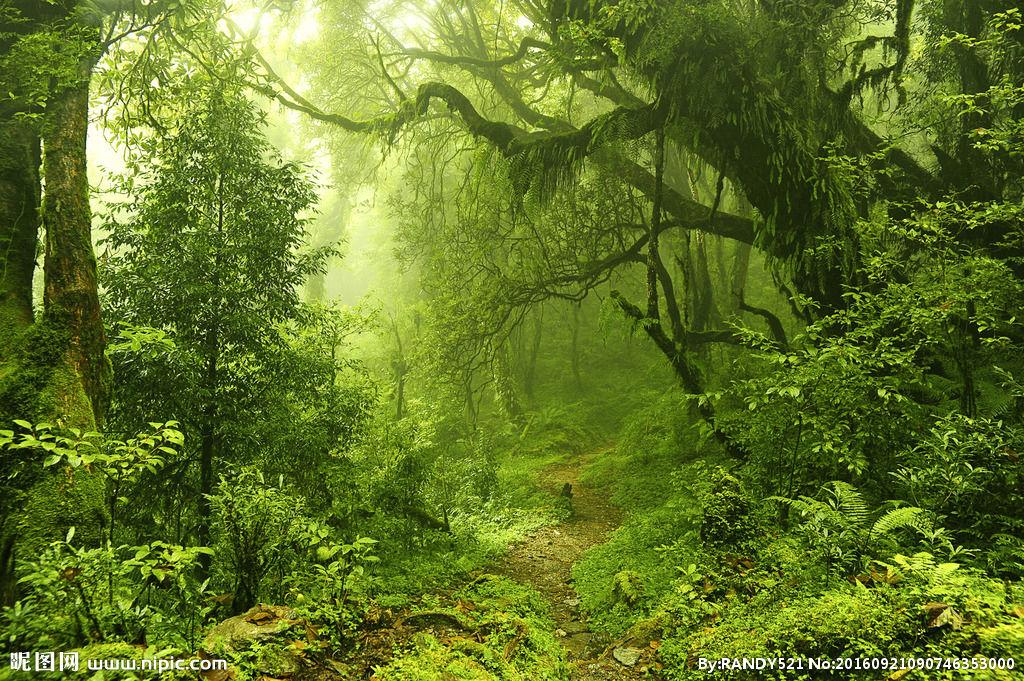 原始森林摄影图片__原始森林摄影图片__原始森林摄影图片图片