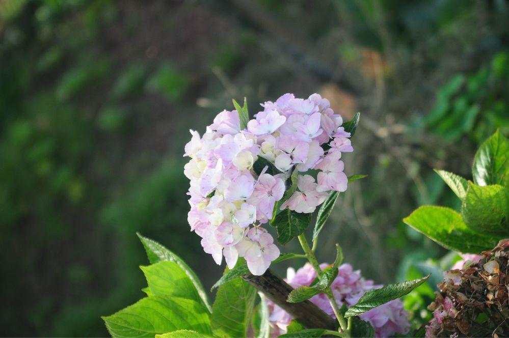bf407高岛由花