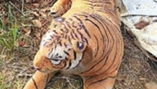 难道说真假难分?老猎人被假老虎吓跑