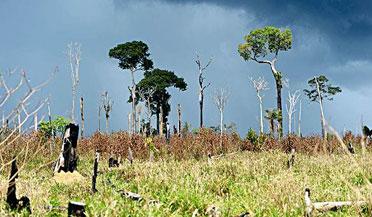 """超罕见!巴西雨林出现""""火龙卷"""""""
