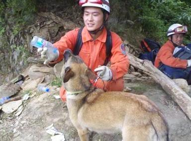 北京最后一只汶川功勋搜救犬火狼走了