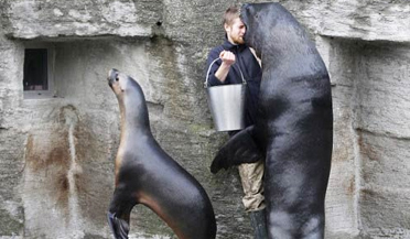 """海狮为吃鱼""""围攻""""狂吻饲养员"""