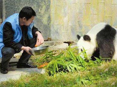 武汉动物园回应熊猫疑遭虐待