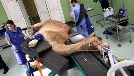 骆驼医院造价千万美元