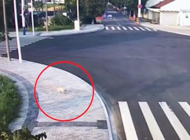 男子横穿马路被撞倒