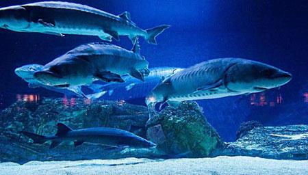 摩托艇驾驶员拍鲨鱼海鸥抢食大战 场面壮观