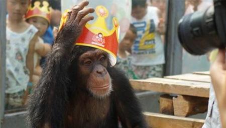 猩猩58岁高寿