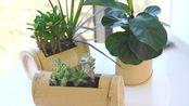 家里的花盆太普通?看看人家做的竹花盆,我怎么就没想到!