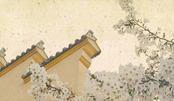 结束了雨季,放晴的南京下起了浪漫的樱花雨!