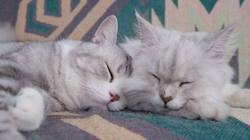 原来猫咪也会做梦?那它们梦里会不会有一些不可描述的...