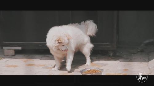 让流浪狗有个家,这个女孩含泪救助百只流浪狗!